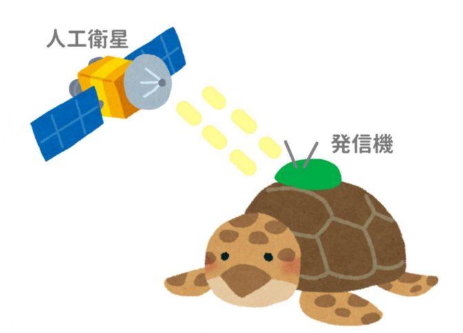 調査研究:ウミガメさんは今どこに?ついに、屋久島到着!