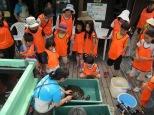 ウミガメさんの甲羅洗い
