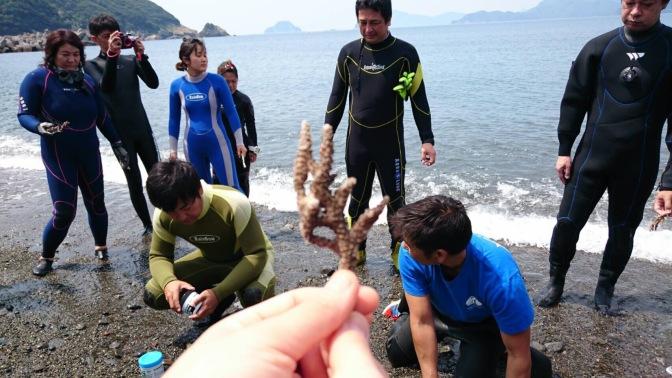 海底ビーチクリーン・珊瑚の修復♪
