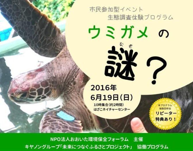 生態調査体験プログラム「ウミガメの謎?」6月19日(日)10時~(約2時間)