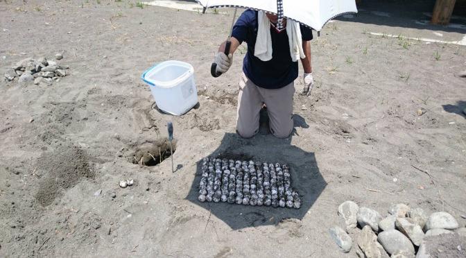 間越海岸産卵調査