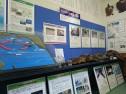 ウミガメの種類と生態展示コーナー