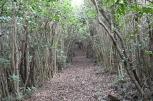 ツバキに囲まれた木のトンネル