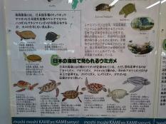 実はこんなにたくさん種類がいるカメ