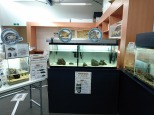 ウミガメ水槽