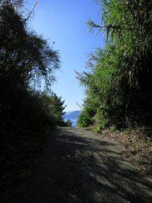 はざこ海岸へ続く道