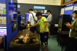 大人のアカウミガメはこんなに大きい!