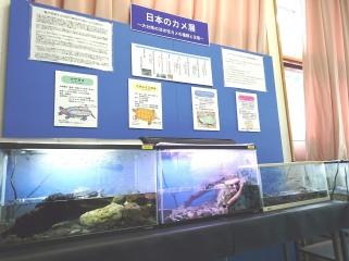 企画展:日本のカメ展