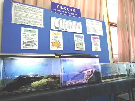 日本のカメ展