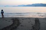 海岸に残ったウミガメの足跡