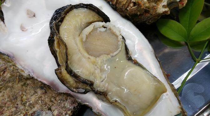 天然岩牡蠣入荷しました!
