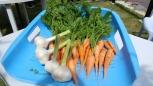 地域おこし協力隊の方が育てた野菜