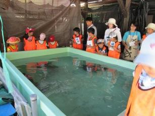 水槽の周りでウミガメについてレクチャー