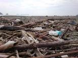 渡瀬川キャンプ場跡地 台風のあとの流木がたくさん