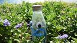 ハマゴウの花畑