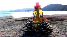 海岸に落ちていた松ボックリ