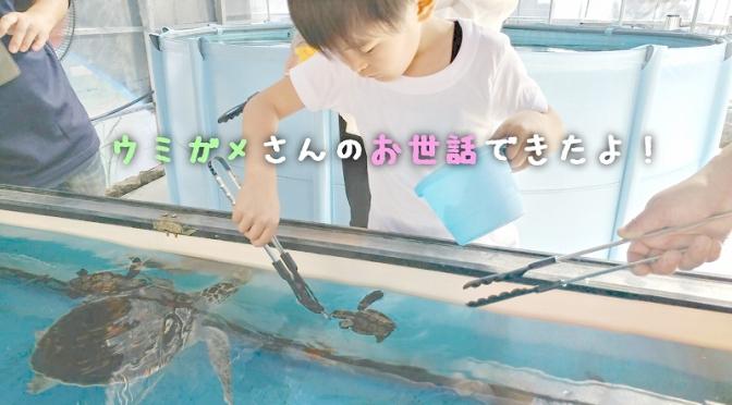 受付中!GWにウミガメのお世話を体験