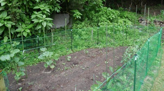 野菜がいっぱい!はざこ菜園