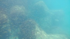 シュノーケリングでも海の中の生き物が観察できます