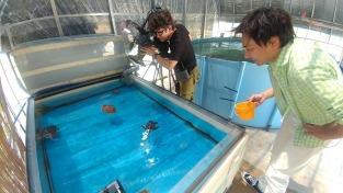 ウミガメ飼育員さんのお仕事体験プログラム