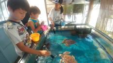 ウミガメ飼育員さんのお仕事体験プログラムでエサやり