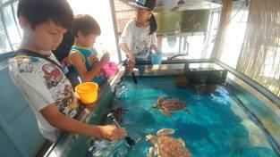 ウミガメ飼育員さんのお仕事体験