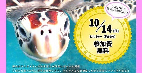 明日!特別無料「ウミガメ飼育員さんのお仕事体験プログラム」