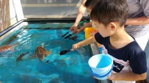 ウミガメ飼育員さんのおしごと体験