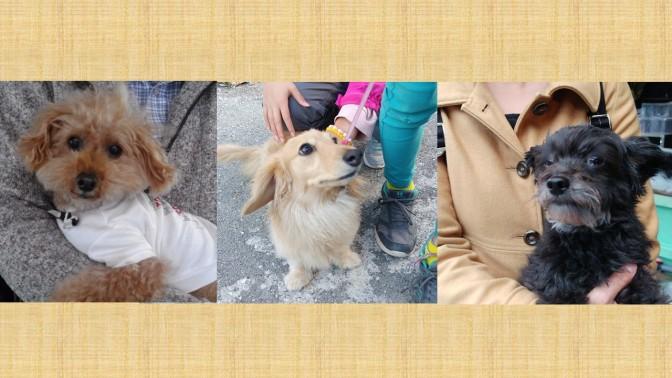 GWに愛犬と楽しい思い出を