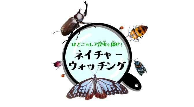 ネイチャーウォッチング 昆虫採集プログラム準備中