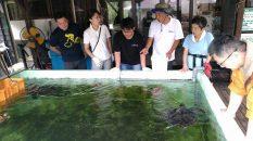 保護しているウミガメからプラスチックゴミが見つかったのです。