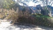 入口前の倒木