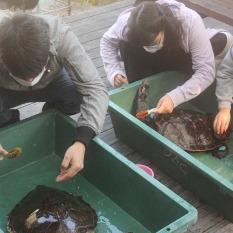 ウミガメのお風呂タイム(体を洗います)